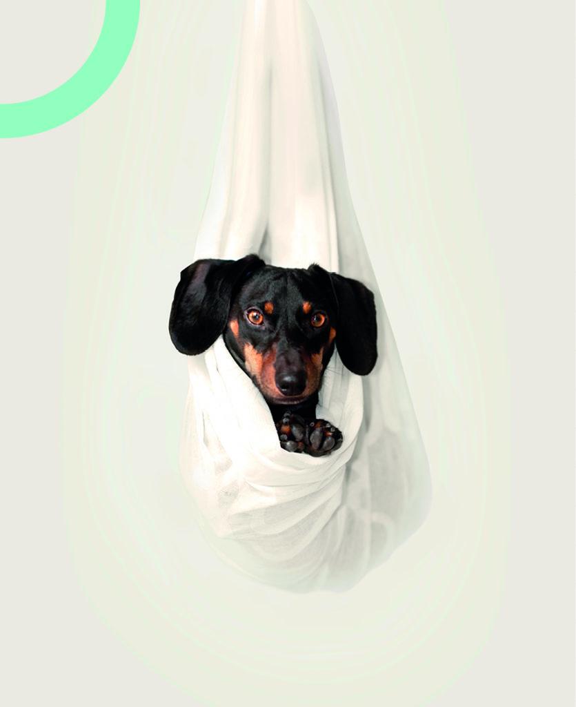 identité visuelle cabinet vétérinaire